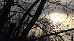 Dark branches of trees against backdrop of sky and storm clouds, contrast Stock Footage
