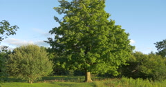 Wooden bench and table between beautiful trees at Caledon, Canada Stock Footage