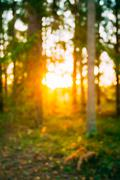 Abstract Autumn Natural Blurred Forest Bokeh Background Stock Photos