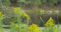 View of wild flower near the lake at Lake Muskoka, Canada Stock Footage