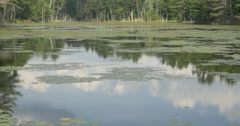 Water lilies, water silk and sky reflecting in the water at Lake Muskoka, Canada Stock Footage