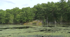 Water lilies on the lake and the rocky shore with trees at Lake Muskoka, Canada Stock Footage
