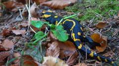 Salamander fire running through autumnal forest vegetation - stock footage