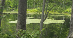 View of water lilies on the lake and green trees at Lake Muskoka, Canada Stock Footage