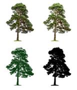 Pine tree in four different illustration techniques Stock Illustration