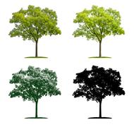 Tree in four different illustration techniques - Pagoda Tree Stock Illustration