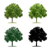 Tree in four different illustration techniques - Plane Tree Stock Illustration