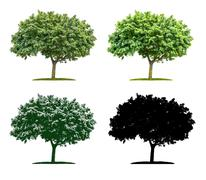 Tree in four different illustration techniques - Maple Tree Stock Illustration