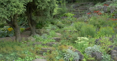 Beautiful stairs surrounded by plants in a natural park at Kitchener, Canada Stock Footage