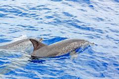 Dolphins Kuvituskuvat