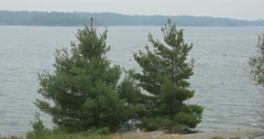 Beautiful view of fir trees on the shore of the lake at Killbear Provincial Park Stock Footage