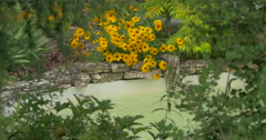 View of yellow flowers near a small artificial lake at Kitchener, Canada Stock Footage