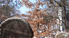 Tombstone and church tower seen through tree branches - stock footage