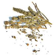 Dried Woundwort - stock photo