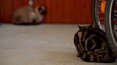 Two stranger cats looking each other in garage Stock Footage