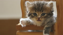 Close up of cute little tabby kitten is laying in wood basket Stock Footage
