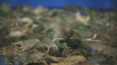 Live crayfish in a supermarket. Close up Stock Footage