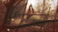 The last leaf of a three hanging on branch at autumn season Stock Footage