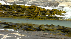 Kelp swirls like whole wheat linguine in a simmering kettle Stock Footage