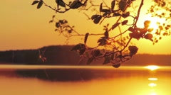 Spider walking on web with sunset over the lake in background - stock footage