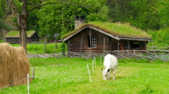 Stock Video Footage of animal husbandry livestock breeding, norwagian village, green grass rooftop,