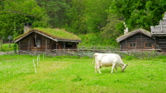 animal husbandry livestock breeding, norwagian village, green grass rooftop, - stock footage