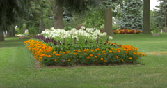 View of beautiful flower beds and big fir trees at Kitchener, Canada Stock Footage
