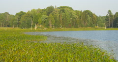 View of plants grown on the shore of the lake at Killbear Provincial Park Stock Footage