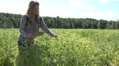 Beautiful villager woman pick ripe peas pods in farm plantation. 4K Stock Footage
