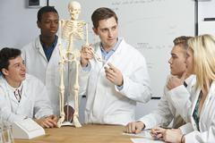 Teacher With Model Of Human Skeleton In Biology Class Stock Photos