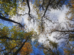 Clouds in the autumn forest 2k Stock Footage