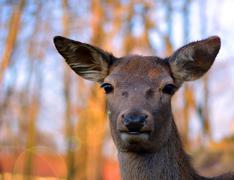 The alert deer Stock Photos