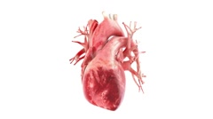 Human heart rotation , loop with alpha Matte Stock Footage