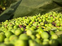 Picked olives close up - stock photo