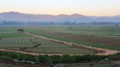 Shallots field with mountain background, Thailand Stock Footage