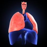 xray view of human lungs - stock illustration