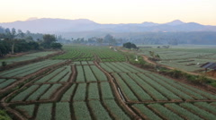 Shallots field with mountain background, Thailand - stock footage