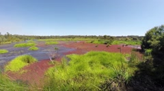 Colourful swamp lake in Australia Stock Footage