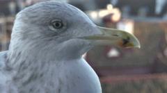 Birds city seagull Stock Footage