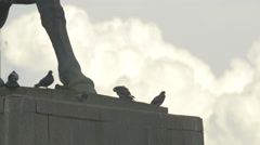 Pigeons standing next ti the statue of Mihai Viteazu in Cluj-Napoca Stock Footage