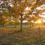 Autumnal trees at sunset Stock Photos