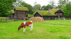 Animal husbandry livestock breeding, norwagian village, green grass rooftop, Stock Footage