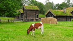 Animal husbandry livestock breeding, norwagian village, green grass rooftop, Stock Footage