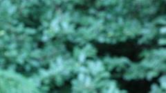 Close up of Africa safari paraffin camping lantern - stock footage
