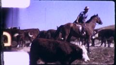 Cowboy Herding Cattle Cows Steers Ranch 1950s Vintage Film Home Movie 9277 Stock Footage