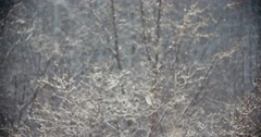 4k snow falling at sunny day, winter wonderland background, the snow sparkles in Stock Footage