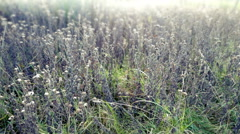 Moving Through Wild Plants Stock Footage