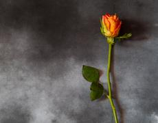 Condolence card with yellow rose - with deepest sympathy - stock photo