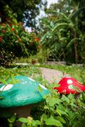 Two stone mushroom in the green grass of a garden Stock Photos
