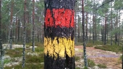 Marked tree on a path in the forrest, in Uusimaa, raasepori, Finland Stock Footage